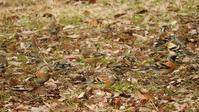 1月 野川野鳥観察会 - 山と鳥を愛するアナパパ