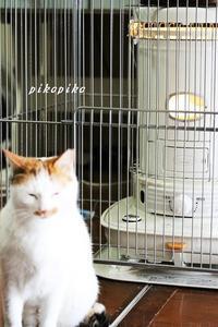 猫とストーブ   (くらし部門) - 今が一番
