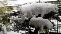 寒い1日でした - Baking Daily@TM5