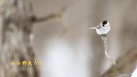 ハシブトガラ - 北の野鳥たち