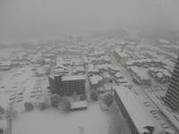 大雪でした~~!! - 本当に幸せなの?