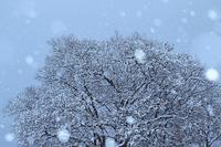雪の宿 - 傍らにある風景