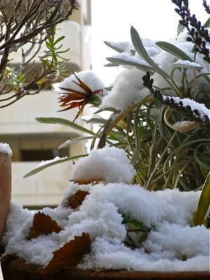 雪の朝 - Syumizin / 茶藝館