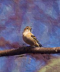 冬の野鳥たち12 アトリ - 光 塗人 の デジタル フォト グラフィック アート (DIGITAL PHOTOGRAPHIC ARTWORKS)