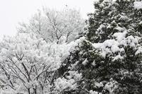 雪とあんこLOVERS - ミノリスト