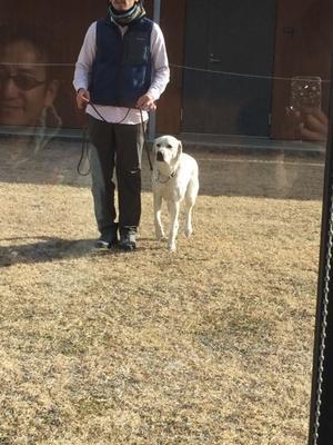 ウォルター、イザベルに幸多かれ?? - 盲導犬イザベルとウォルターを育てる日々 パピーウォーカー日記