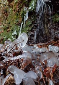 小雪降るなかキリシマ探索 - 蝶超天国