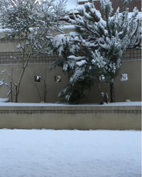 雪 - Gracious style
