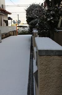 雪! 姫ちゃん初めての体験(^^♪ - 長老猫とマミーの徒然日記