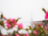 霧の景色を *2 - M2_pictlog