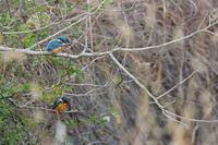 下見からの仮屋漁港 - 淡路島の野鳥ブログ...++