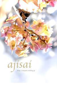 冬紫陽花 - オアシスの庭/ボヤントメッセージ