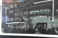 2016年12月 白浜パンダ見隊2 その5 桜&桃にリース - ハープの徒然草