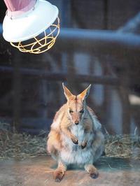 1月16日(月) 寒がり屋 - ほのぼの動物写真日記