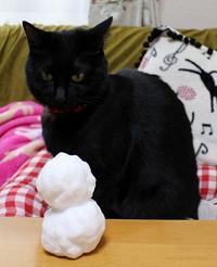 寒波襲来 - 黒猫瓦版