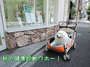 気軽に健康相談♪ 【PET'S ALL RIGHT】 - サモエド クローカのお気楽日記