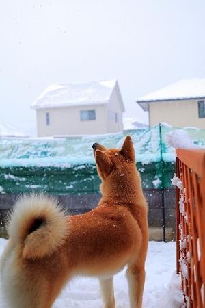 雪。 - 結局ただの犬バカです。