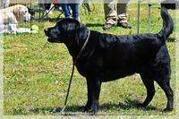 同じ犬種でもマッサージポイントが違う。 マハロちゃんとマリアちゃん - はばたけ MY SOUL