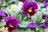 連続の寒い日 - O's garden へ ようこそ~ ♪