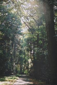 天文台の木漏れ日 - mitakamo