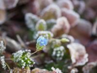 凍てつく朝 - 花と野菜と器たち