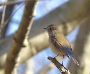 近い - 多摩子の鳥見・散歩
