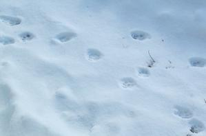 冬景色 - キシノウエンの 今日のてしごと