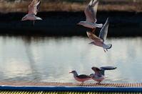 分身之鳥 - 幸せな写真時間