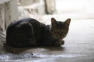暗い - 近所のネコ2