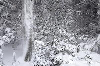 三峰山 極寒に耐える木々たち - ratoの大和路