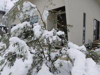 今日も雪 - 日々の雑記ノオト