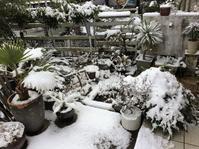 雪が積もりますと・・・雪だるまのレシピ - ケセラセラ~家とGREEN。