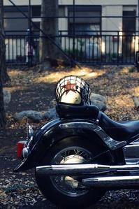 ヘルメット - Hashihiro pHoto.