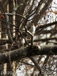 鳥と月と雪と - serendipity blog