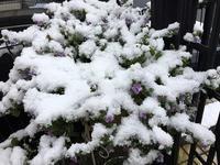 最強寒波到来 - グリママの花日記