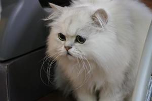 お店がいいの? - オール電化生活!カノンとキアと猫ちゃんと愉快な仲間