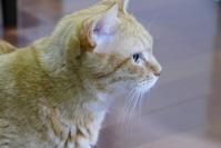 お店がいいの♡ - オール電化生活!カノンとキアと猫ちゃんと愉快な仲間