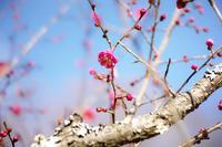 この春を拾う ~ フラワーセンターにて ~ - あんだんて♪の、人生の忘れものを探しに・・・