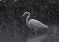 雪降ったのに - 鳥撮りに行こう!(ついでにあれもこれも)