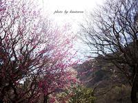 熱海さんぽ 〜熱海梅園〜 - Photographie de la couleur