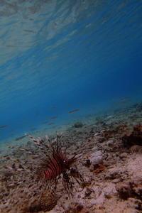 17.1.17 いいな、いい~な!の日(笑) - 沖縄本島 島んちゅガイドの『ダイビング日誌』