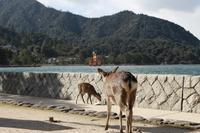 【厳島神社】広島旅行 - 2 - - うろ子とカメラ。
