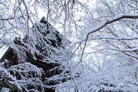 真如堂の雪景色(真正極楽寺)(写真部門) - 花景色-K.W.C. PhotoBlog