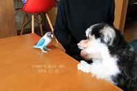 B.B & Chipo* 先輩の威厳(?)・・・ (動物・ペット部門) - FUNKY'S BLUE SKY