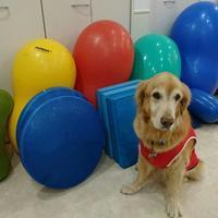 第2回 バランスボール(犬)教室開催 - PuaLsla Cafe Dog Bird Culture