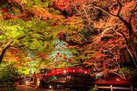 紅葉2016! ~北野天満宮ライトアップ~ - Prado Photography!