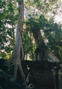 Cambodia #5 - Souvenir~散歩写真のおすそわけ~