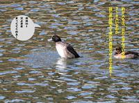 水鳥へ! - Weblog : ちー3歩