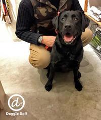 Hello Angie !! - Doggie Do!! / good dog and hello cat !!
