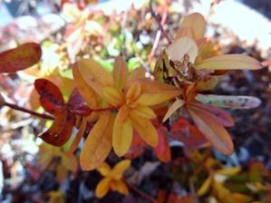 葉っぱ - ろりぽりの花